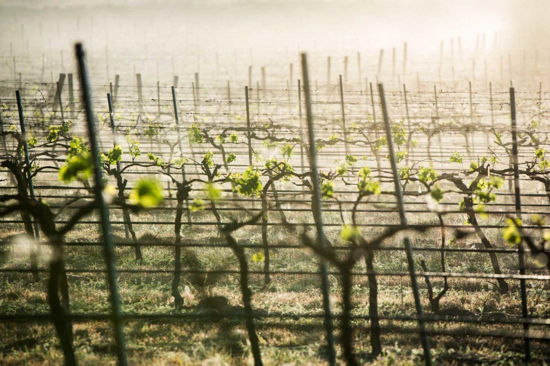 8 best wineries in South Burnett